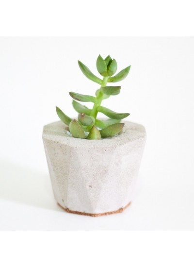 Mini Vaso Diamond - Concreto 6cm